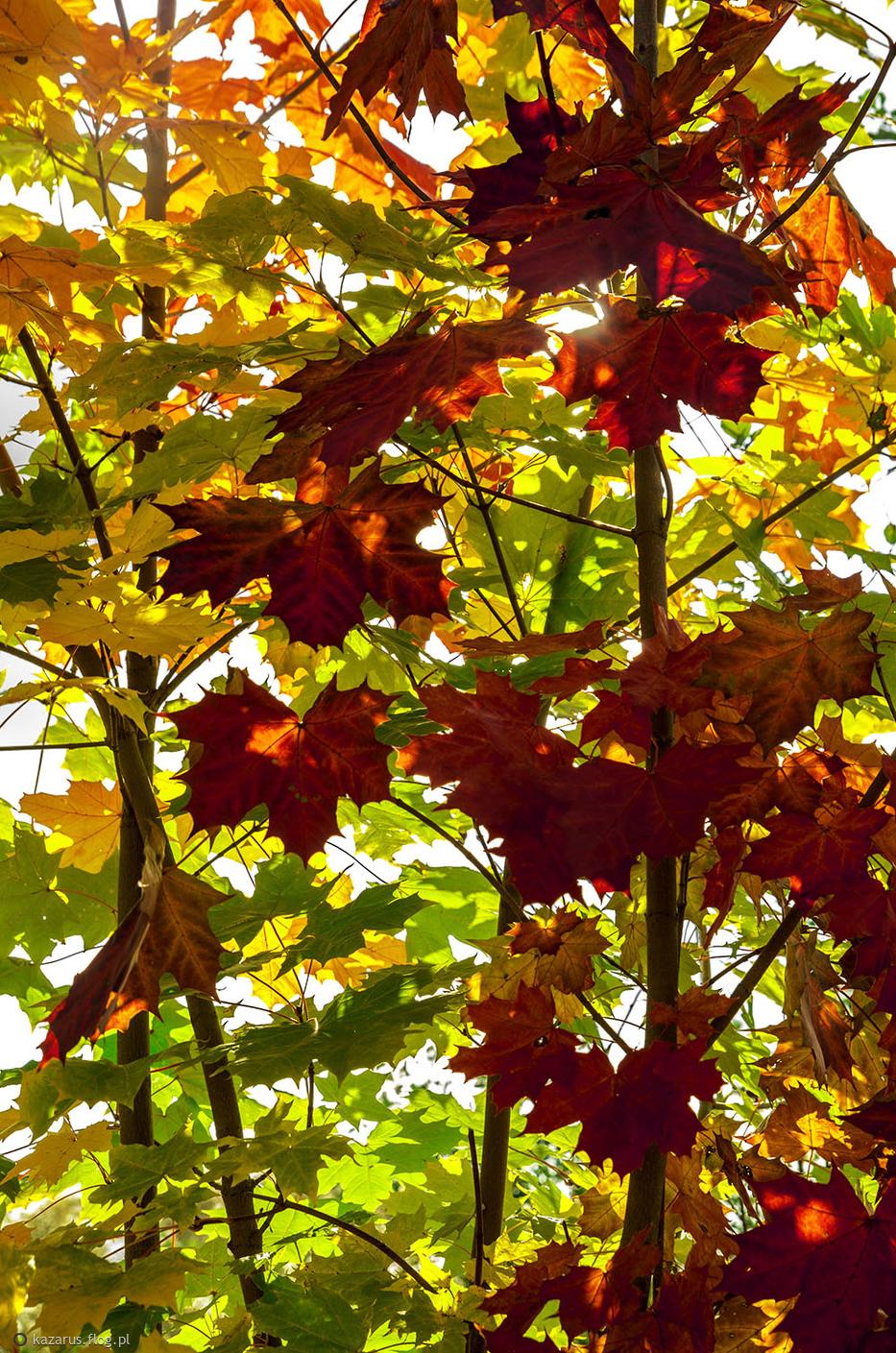 Pełnia jesiennych barw ;)