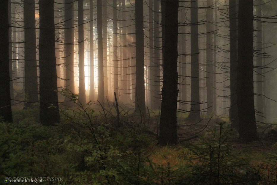 W lesie...