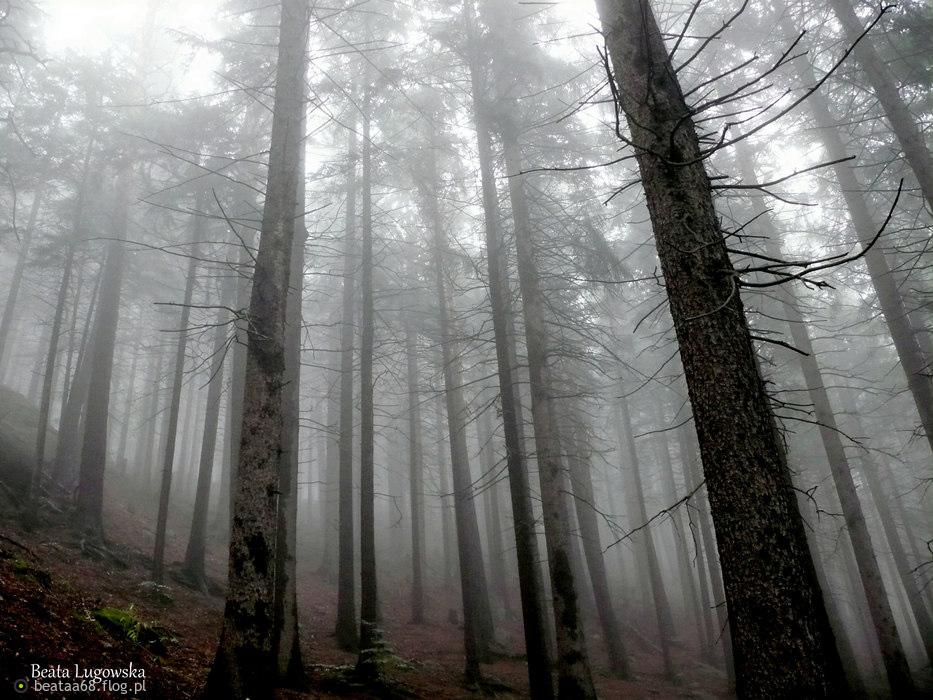 Miłość jest mgłą, która wytwarza się w głowie. Jeśli owa mgła opada na dół - na serce - następuje pogoda życia; jeśli pozostaje w głowie - pada deszcz łez.