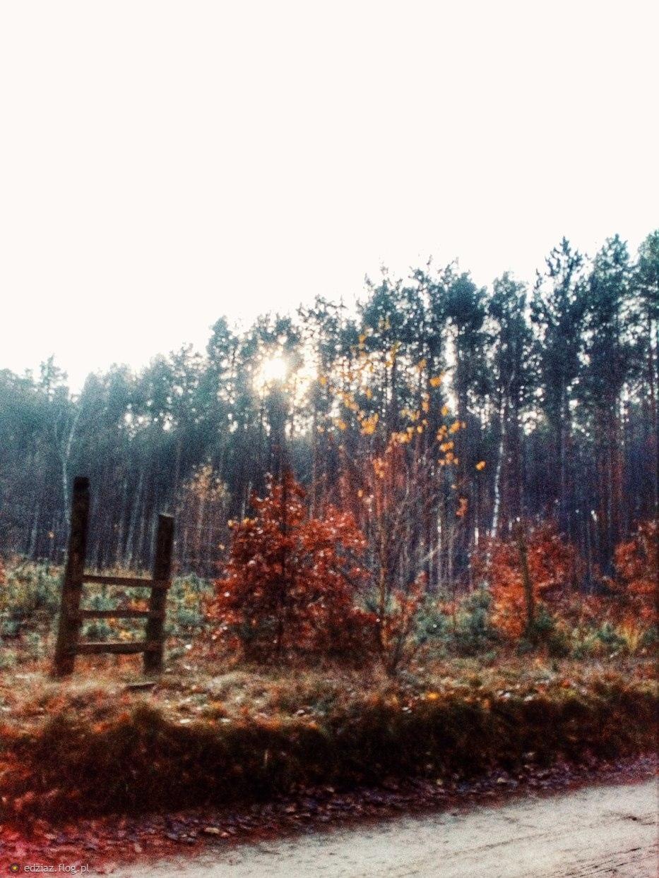 Jesienny wypadzik :)