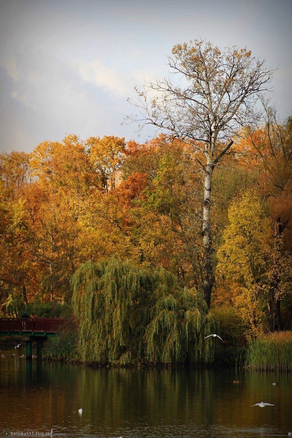 Park Sołacki jesienią...