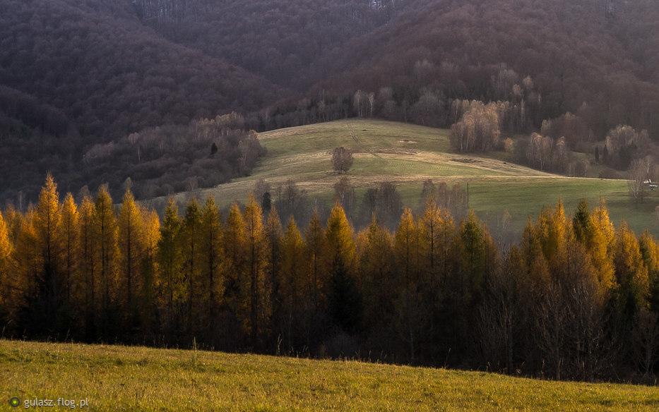 gdy na górze zima - na dole nadal złota polska jesień :)