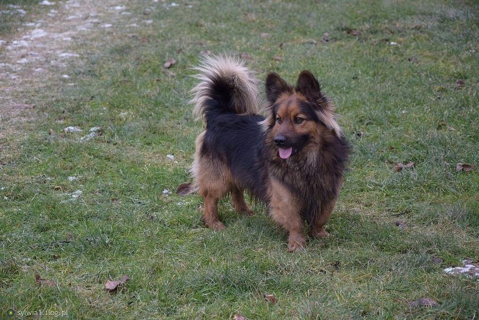 Pies największym przyjacielem człowieka :)