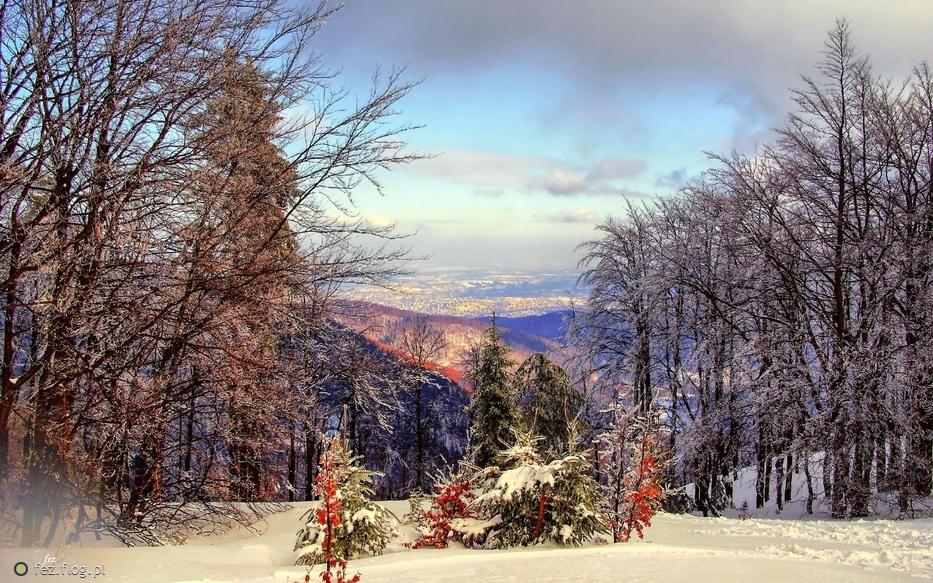 Kolory zimy...