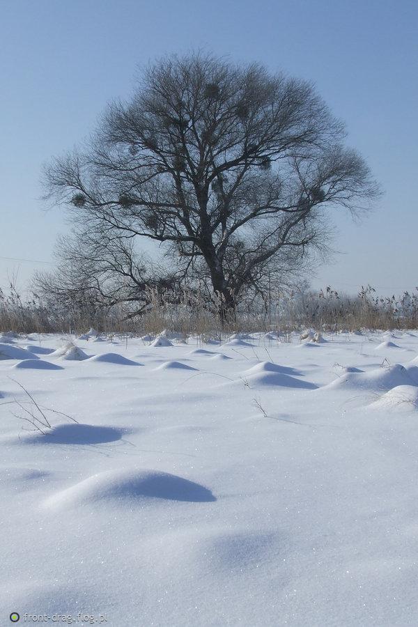 Zima 2010...