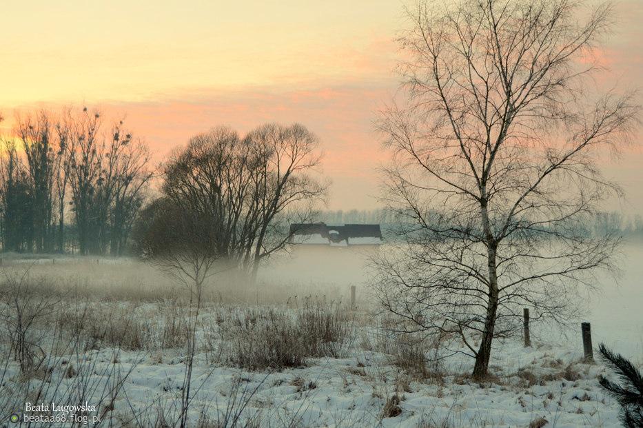 Z moich spacerków zimowych :)