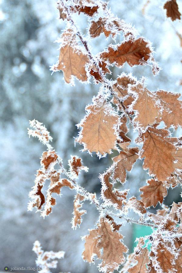 Zimowy artysta