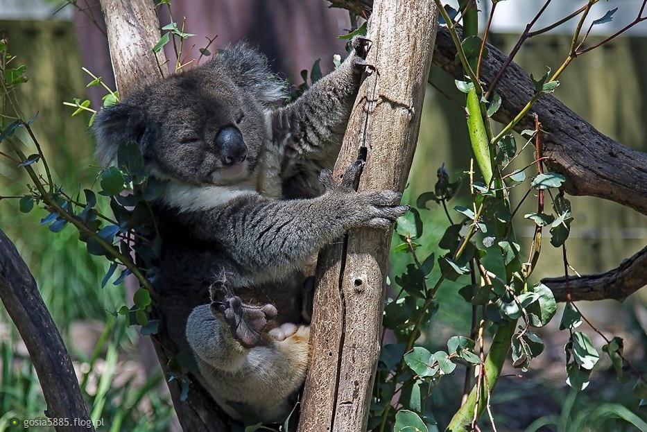 Pozdrawiam cieplutko i życzę super dnia. Obchodzimy dziś narodziny Australii (Australia Day).