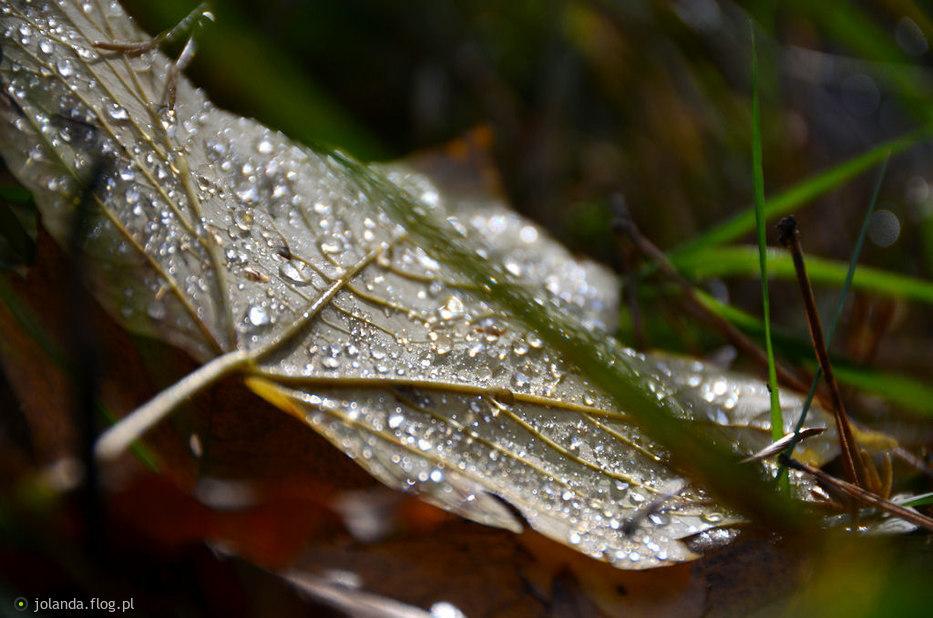 Jesienna Puszcza