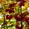 Pełnia jesiennych barw ;) :: Jak w temacie drzewko któ<br />re ukazało wszelkie barwy<br /> naszej Polskiej złotej j<br />esieni ;)