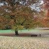 :: Przyszła pani jesień.....