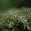 pokropione deszczem