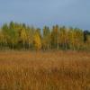 Podlaska jesień ::