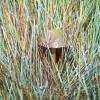 tu się schował :-)  :: Jesień umkneła przed mym <br />obiektywem-mała strata ;-<br />)  Tego gościa wypatrzyłe<br />m przez okno w mini