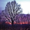 Drzewo we śnie
