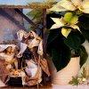 Dla Was Kochani, by ten c<br />zas Bożonarodzeniowego św<br />iętowania wypełniony był <br />miłością, szczęściem i zd<br />rowiem...Inanne
