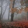mgła smutku przysłoniła ś<br />wiat...Tereniu jeśli lubi<br />sz mgiełki to proszę ...d<br />la Ciebie :)