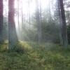 magia lasu ;-)  :: Wszystkim życzę miłych pr<br />zedświątecznych dni i mił<br />ego wieczorku :-)