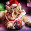 """""""Gwiazdor"""" :) :: Dedykacja dla wszystkich, którzy złożyli mi piękne, świąteczne życzenia pod poprzednim wpisem, księd"""