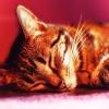 Sny zależą od pozycji śpi<br />ącego