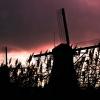 Holenderskie wiatraki :: Zaraz po gradzie :)