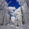 Totalna Bajka  :: Droga na Połoninę Wetlińs<br />ką las to była czysta mag<br />ia &lt;3 a u góry na same<br />j połoninie -24 st
