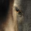 ::                          <br />                         <br />&amp;bdquo;Nie sztuka jes<br />t pokochać konia, sztuka