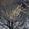 naturalne cuda :: drzewa tylko opracowane n<br />a zajeciach