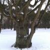 W zimowej scenerii.:-) An<br />iu dla Ciebie za miłe wpi<br />sy , dedykacje i za to ,ż<br />e jesteś.:))
