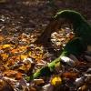 Zielony wąż