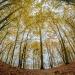Pod kopułą lasu