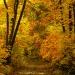 Poczuć zapach jesieni