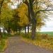 Jesień widziana przy szosie dla Ciebie Jadziu z pozdrowieniami! Miłego wieczoru:)