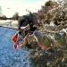 Oszroniona przyroda-fotog<br />rafowane przy uzyciu hono<br />ra 7 w temperaturze -4 :: Efekty po drobnej korekcj<br />i sa zadawalajace-tymbard<br />ziej ze to bylo fotografo<br />wane honorem 7 ktory posi