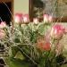 Piosenka i kwiaty dla WAS