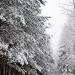 Zimowy spacer :: U mnie zima na całego, sy<br />pie cały dzień.