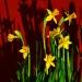 A u mnie już wiosna! :) ::
